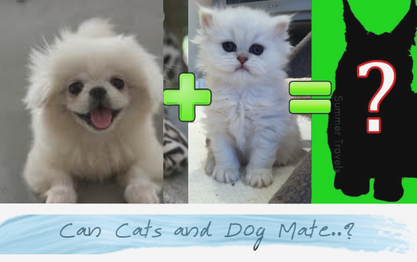 Can Cat and Dog Mate? Fact Check
