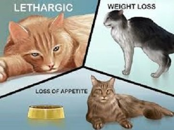 Cat Dewormoing and What to Expect After Deworming a Cat