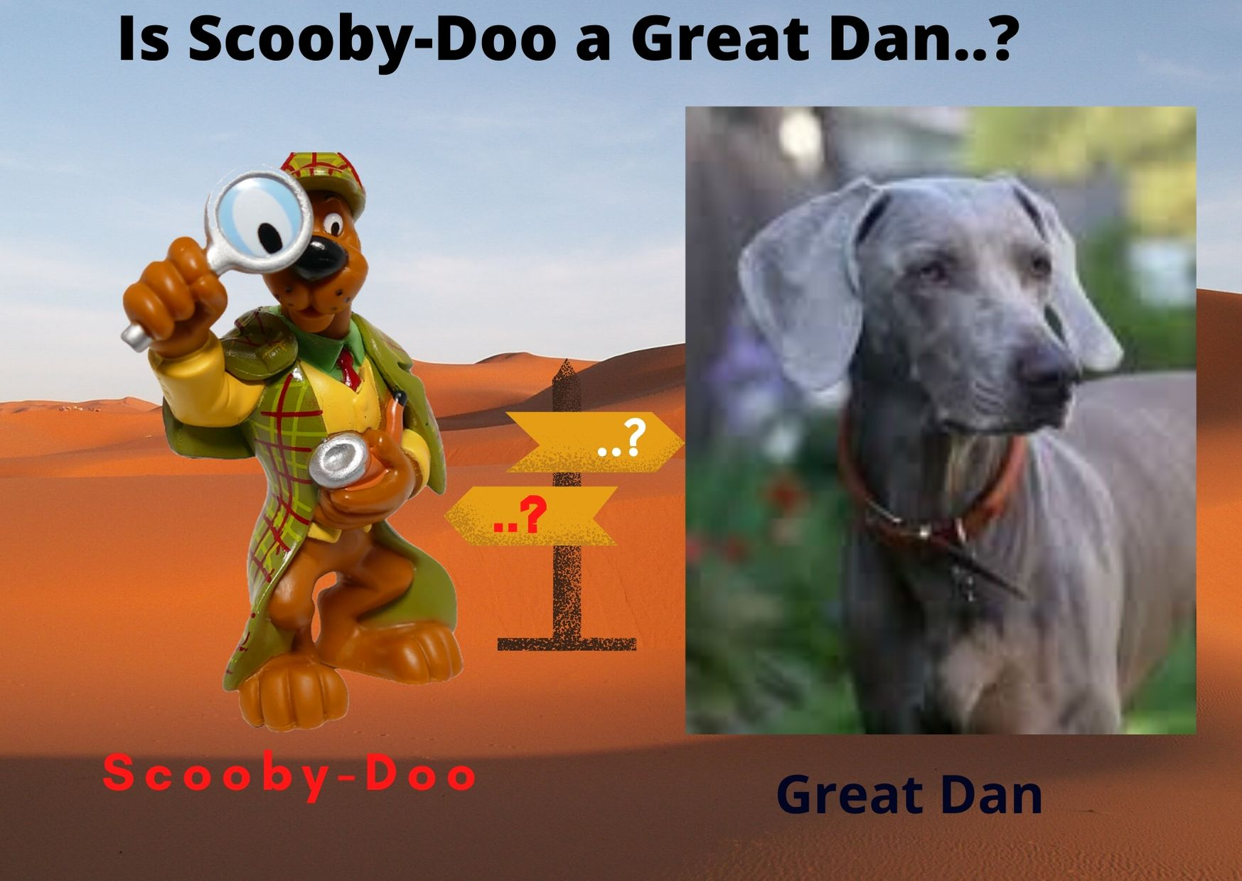 What kind of Dog is Scooby-Doo