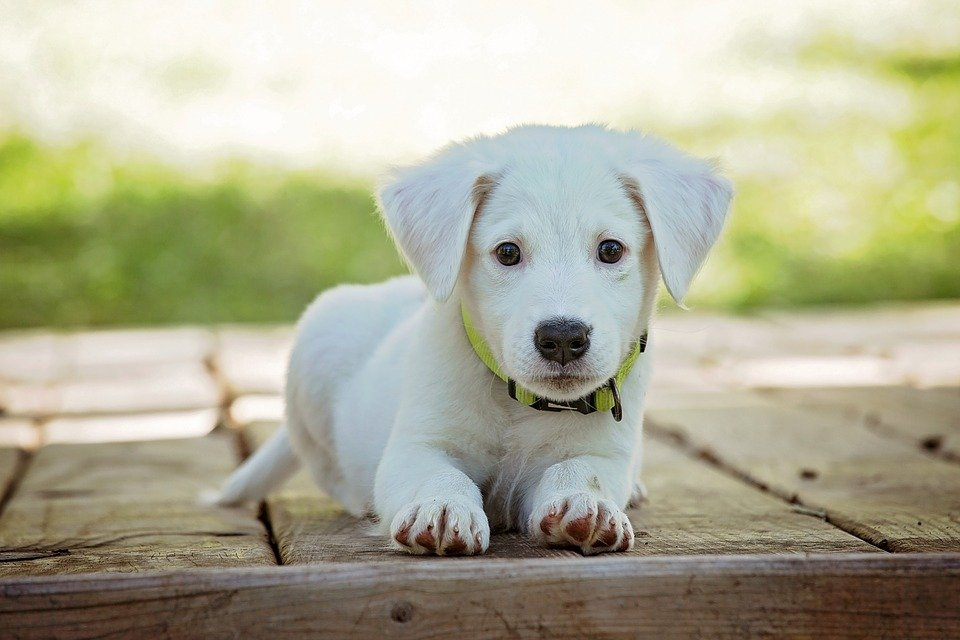 how-long-will-my-puppy-poop-worms-after-deworming