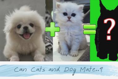Can Cats and Dogs Mate? Fact Check