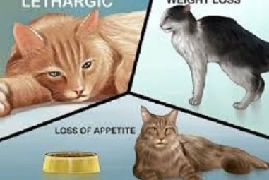 What to Expect After Deworming a Cat: Cat Deworming