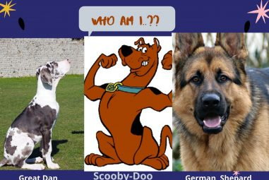 What Kind of Dog is Scooby-Doo? Fantasy vs Reality